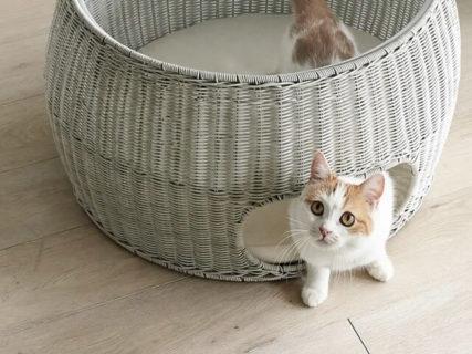 ラタン調の猫ちぐらやキャットタワーなどが新発売!ディノスの猫用品&猫グッズ5選