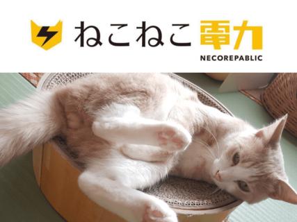 毎月の電気料金の一部が保護猫のために役立てられる「ねこねこ電力」がサービスを開始