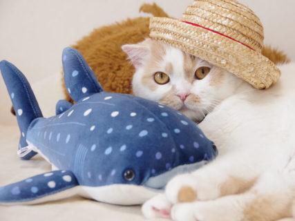 人気猫・ホイップの単独展「まるごとホイちゃん展」の夏祭りバージョンが7月26日から開催ニャ