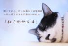 100点以上の作品を展示!猫と人のハッピーな暮らしを捉えた写真展「ねこめせん4」が豊田市で開催