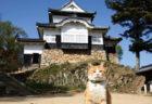 観光客が減ったお城をV字回復させたネコの実話を書籍化「備中松山城 猫城主 さんじゅーろー」
