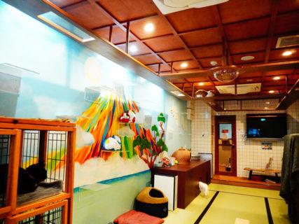 昭和のレトロな銭湯をイメージした猫カフェが大阪に誕生!ネコと足湯で癒やされるニャ〜