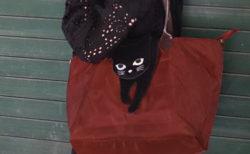 猫と一緒にお散歩している気分を味わえるニャ〜♪ 2WAYバッグ「のび猫」シリーズが登場