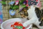 猫のお世話係を探せる「ニャッチング」お祭り気分を味わえるイベントを8/10に開催