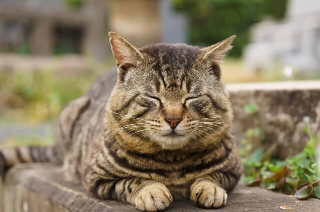 外で気持ち良さそうに眠るキジトラ猫のイメージ写真