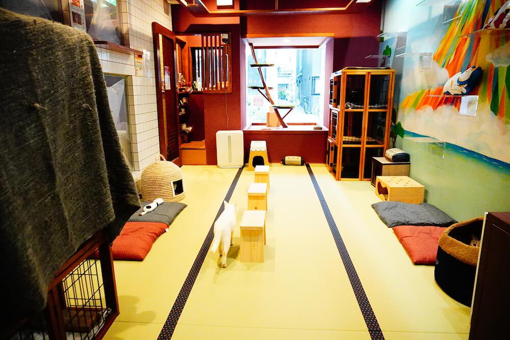 猫カフェ「ねこ浴場」の店内は畳