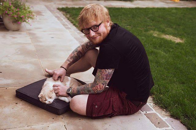 飼い猫を撫でて可愛がるエド・シーラン(Ed Sheeran)の様子