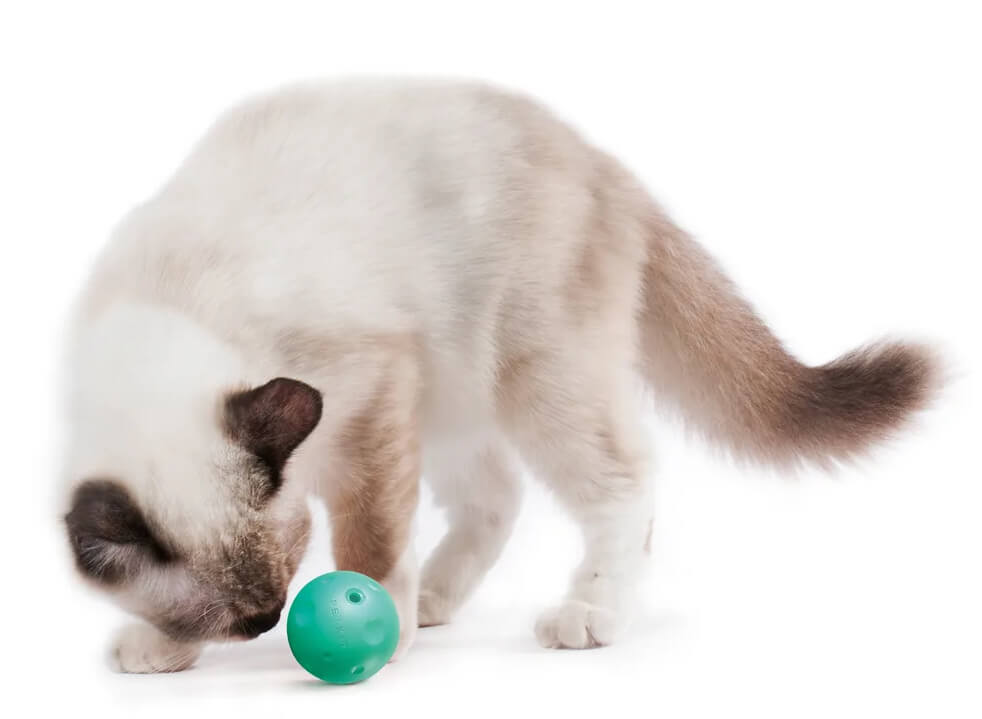 「キャットスクラッチャー」で遊ぶ猫