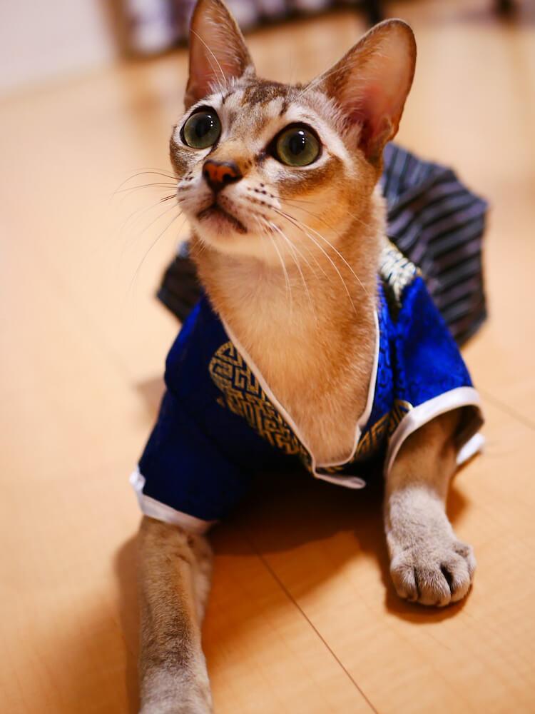 「猫祭り」広報担当の猫