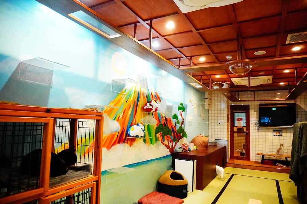 猫カフェ「ねこ浴場」の天井は格子状