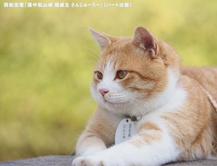 備中松山城の猫城主「さんじゅーろー」の横顔