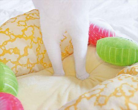 フルーツオムレット型の猫ベッド「にゃんこクレープオムレット」に足を踏み入れる猫