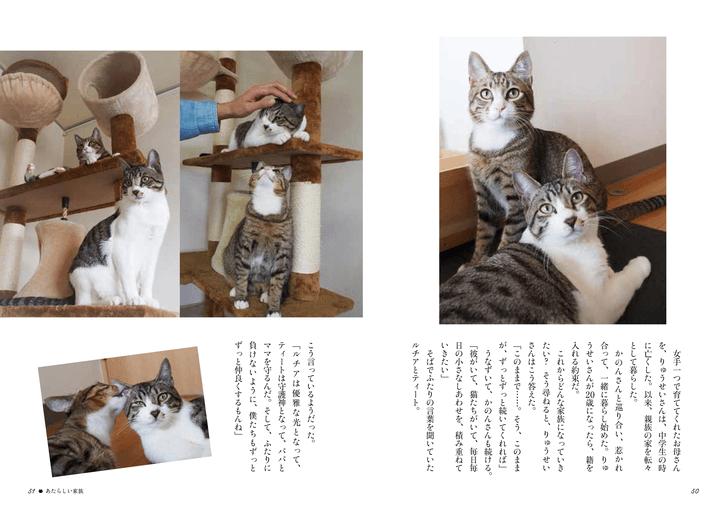 書籍「寄りそう猫」のエピソード6、あたらしい家族