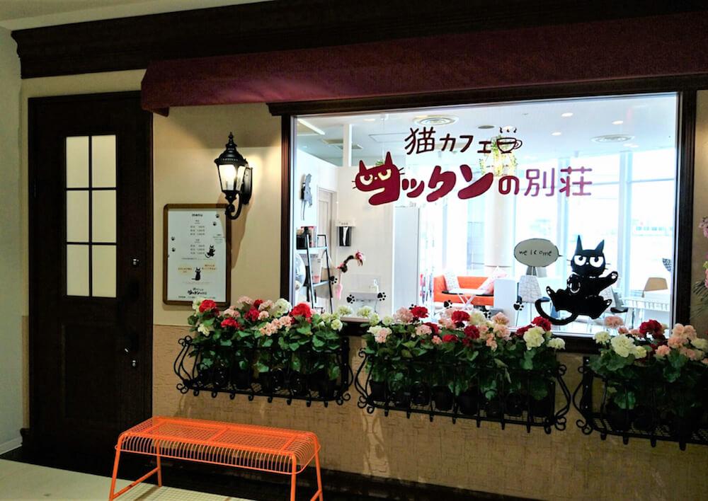 猫カフェ「コックンの別荘」レミィ町田店