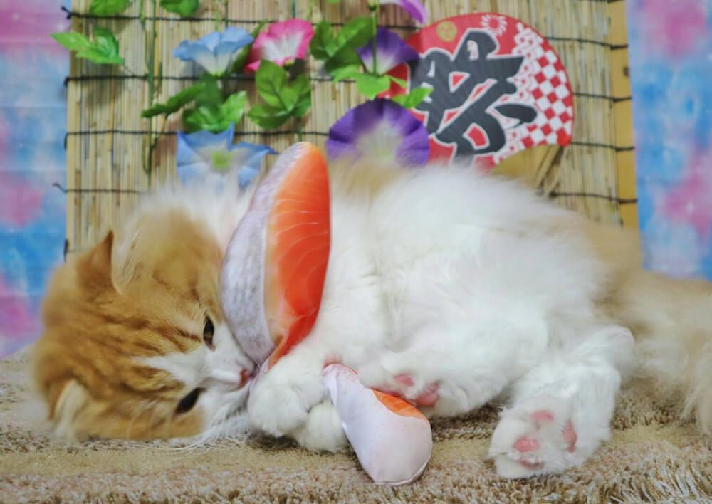 魚の人形のけりぐるみで遊ぶ猫