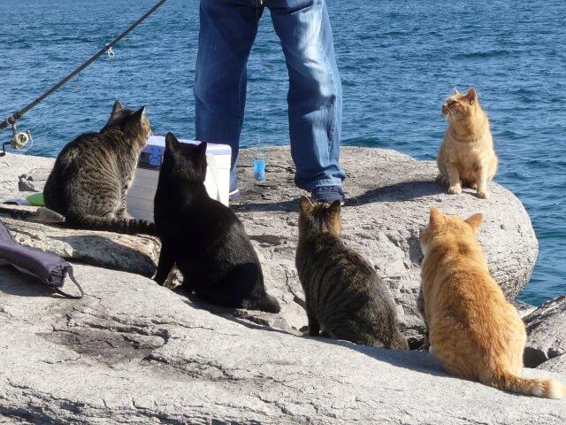 猫島・相島でたくさんの猫に囲まれる釣り人