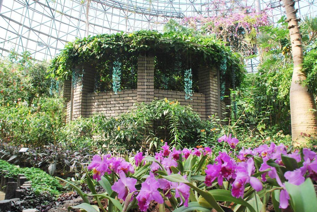 小田原フラワーガーデンのトロピカルドーム温室内部