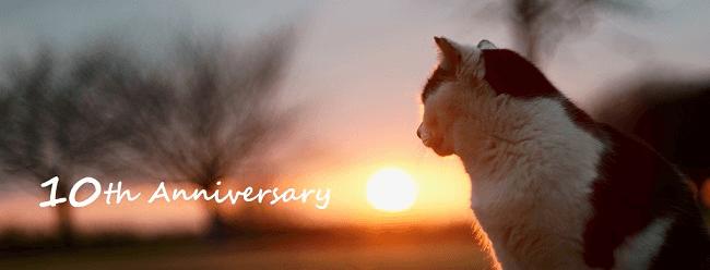 夕陽を見つめる猫の写真 by 命をつないだ ワンニャン写真・動画コンテスト