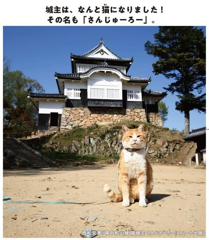 備中松山城をバックに写真撮影をする茶白猫の「さんじゅーろー」