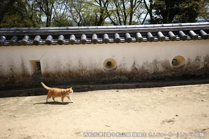 備中松山城内を散歩する「さんじゅーろー」