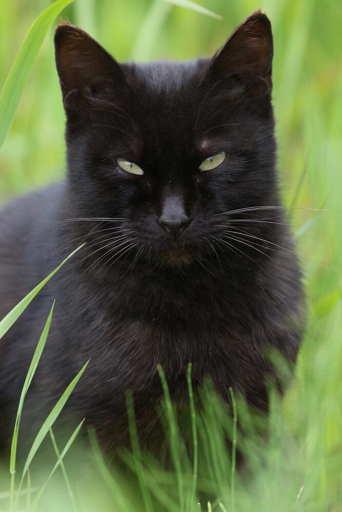 北海道の野良猫の写真 byMANABU