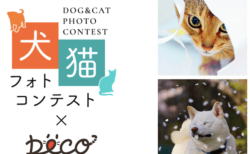 スマホで撮影した写真でも応募できるのにゃ!ソニーの犬猫フォトコンテストが作品募集中