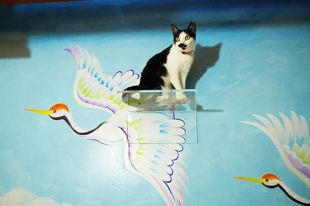 鶴の絵に備え付けられた透明なキャットステップに乗る猫