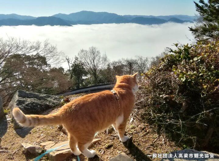 備中松山城から雲海を見渡す猫城主「さんじゅーろー」