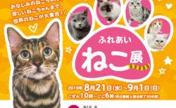 世界中の珍しい猫(約40種類)が大集合!「ふれあい ねこ展」霧島市で8/21から開催