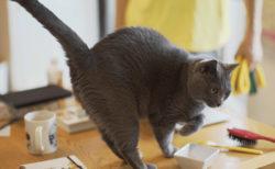 作家と猫の暮らしに密着する人気番組「ネコメンタリー」8月の新作は竹内薫&ますむらひろし