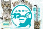 世界中の珍しい猫(約40種類/60匹)が大集合!「ふれあい ねこ展」仙台で9/7から開催