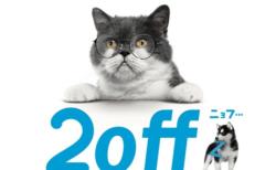 Zoff(ゾフ)の猫キャンペーン「今だけニャンと!「2off」(ニョフ)ニャンペーン」メインビジュアル