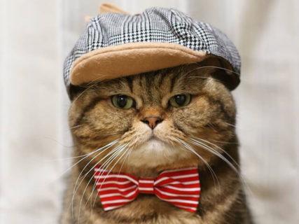 猫を熟知したいなら行くしかニャい…ねこの万博「にゃんぱく」が12月に開催!展示作品や出展者を募集中