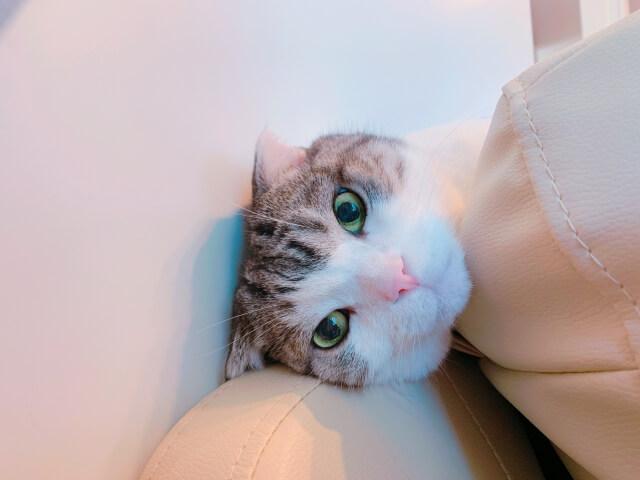 訝しげな顔をする猫のイメージ写真