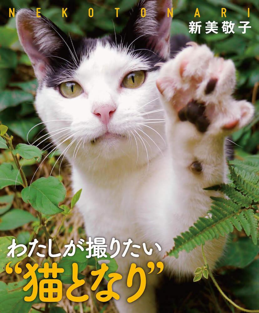 """新美敬子さんによるフォトエッセイ「わたしが撮りたい""""猫となり""""」の表紙"""