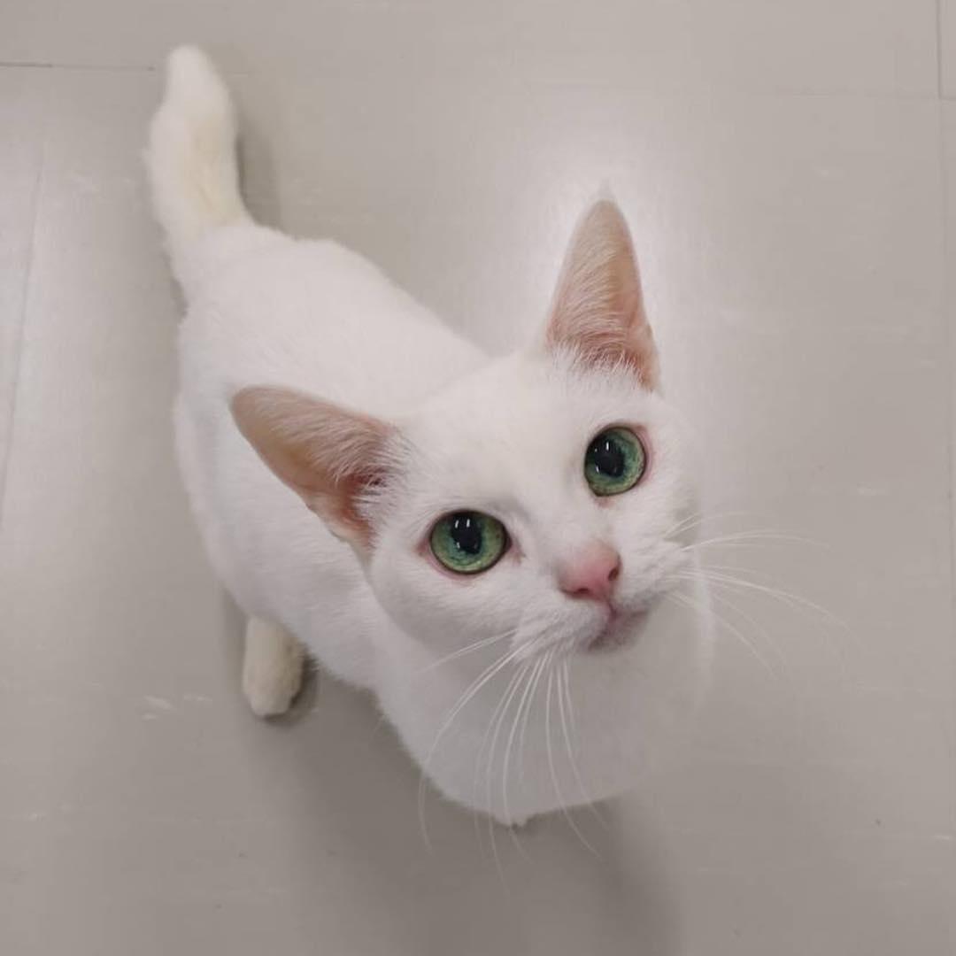 人気猫「あなご」の写真