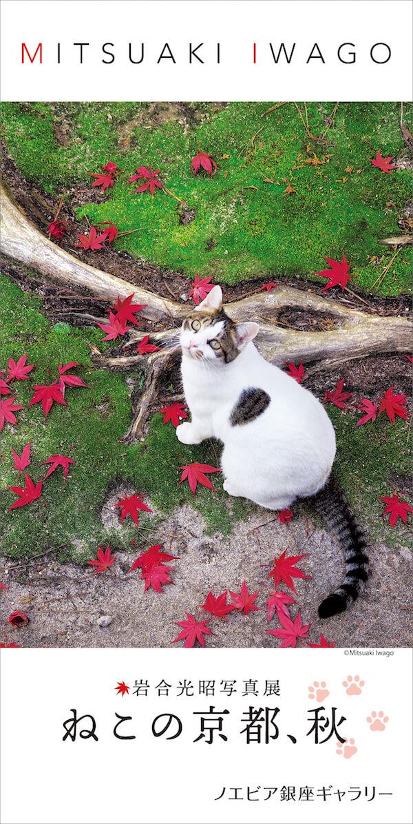 岩合光昭写真展 「ねこの京都、秋」メインビジュアル