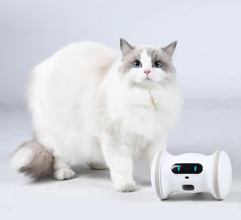 ペットと自動で遊んでくれる「バレム・ペット・フィットネス」と猫