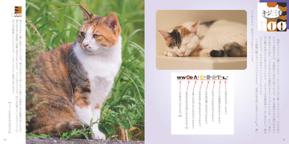 猫の模様が決まる遺伝子の仕組みを解説 by 書籍「ネコもよう図鑑」