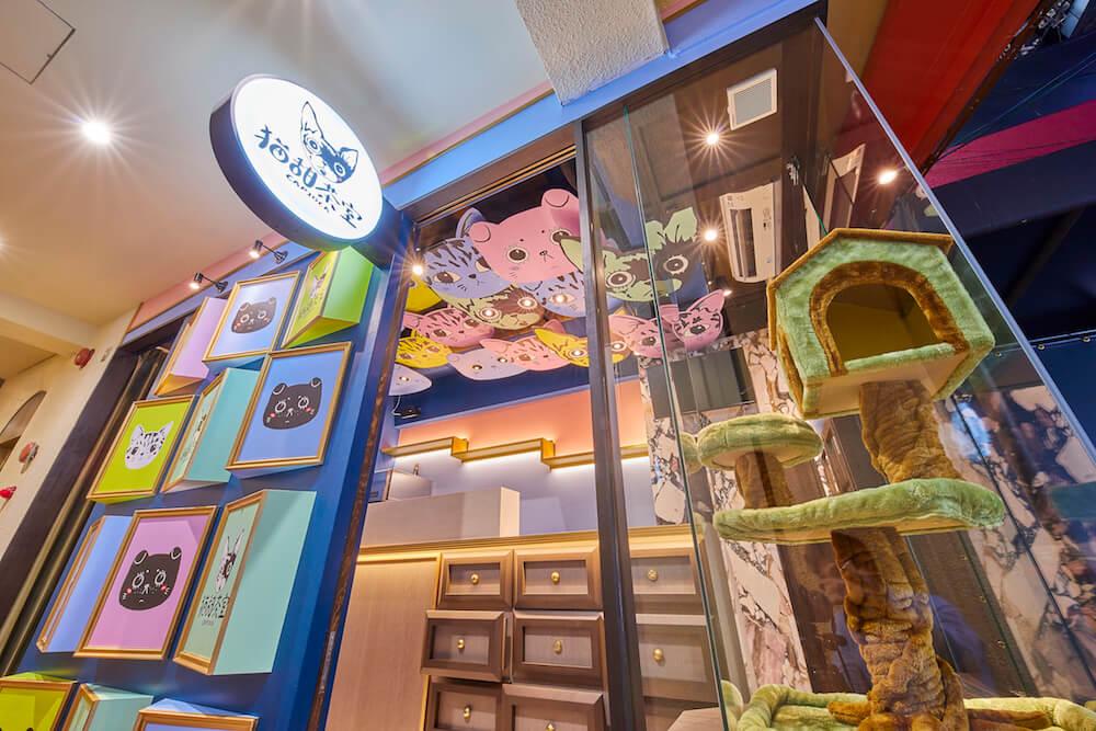 猫甜茶室(ねこてんちゃしつ) capioca(カピオカ)の入り口にある猫店長用のキャットタワー