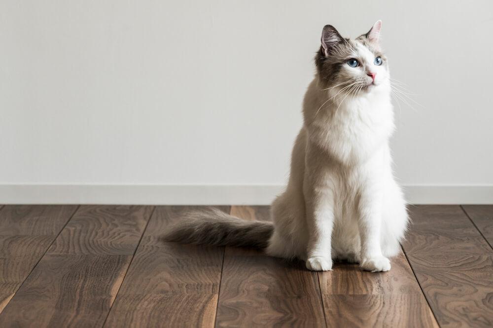 猫用フローリング材「NEKOFLOOR(ネコフロア)」ウォルナットの上に立つ猫