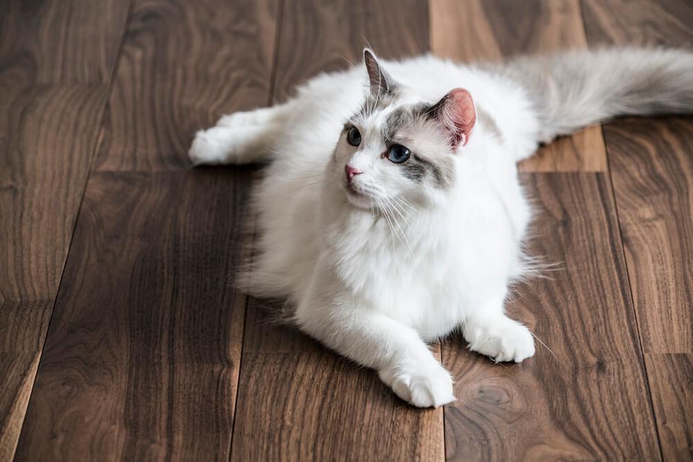 猫用フローリング材「NEKOFLOOR(ネコフロア)」ウォルナットの使用イメージ