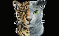垂れ耳はなぜネコだけ障害が出やすいのか?驚きの新事実が満載の図鑑「家のネコと野生のネコ」