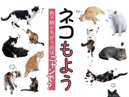 ネコの模様ってどうやって決まるの!?遺伝の仕組みで分かりやすく解説した書籍「ネコもよう図鑑」