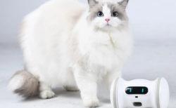 肥満が気になるペットの遊び相手に♪ 自動で遊んで活動量も記録してくれる「バレム・ペット・フィットネス」