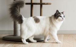 猫用に開発されたフローリング材「ネコフロア」消臭効果が高く着地時の衝撃も和らげるニャ〜