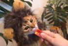 ライオンになりきった猫の映像が大集合!CIAOちゅ〜る×ライオンキングのコラボCMが放送開始