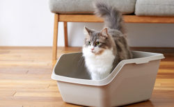 オシッコやスプレーをガードしてくれる猫用トイレ「HY cat(ハイキャット)」を使用する猫