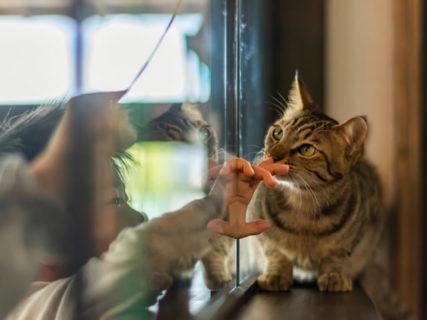さくら猫、りんご猫、れもん猫…不幸なネコをなくすために作られたメッセージジュエリーが登場