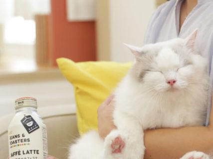 猫の癒やし方って知ってる?獣医師が伝授する8つのポイントをまとめた動画をUCCが公開